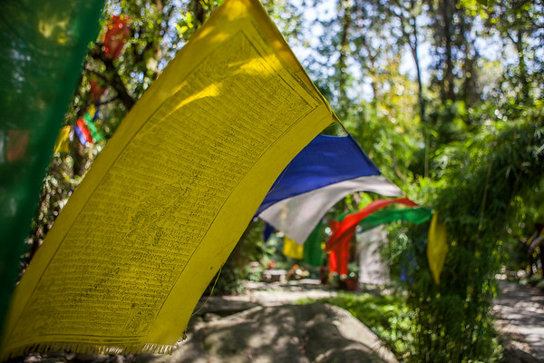 Prayer Flags in Wind, McCleodganj, India