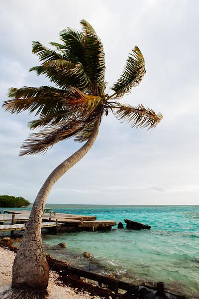 Windy Palm, Caye Caulker, Belize