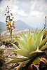 Agave and Volcano, El Salvador