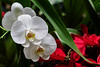Red and white festive floral display