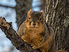 Squirrel checking me out.