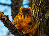 Squirrel checking me out - filtered version (sc 2018-1-22)