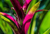 Colorful bromeliad foliage