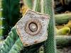 Cactus stalk detail