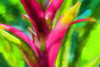 Colorful bromeliad foliage - filtered version