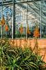Aloe camperi