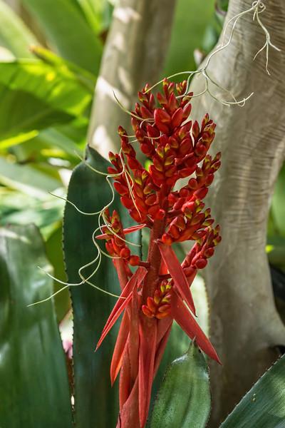 Bromeliad bloom stalk