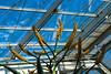 D001-2017  Aloe marlothii beginning to bloom<br /> <br /> Conservatory, Matthaei Botanical Gardens<br /> January 1, 2017