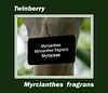 Plant ID label for Myrcianthes fragrans