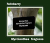 Plant ID label for Myrcianthes fragrans