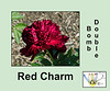 Red Charm as an example of a bomb double peony