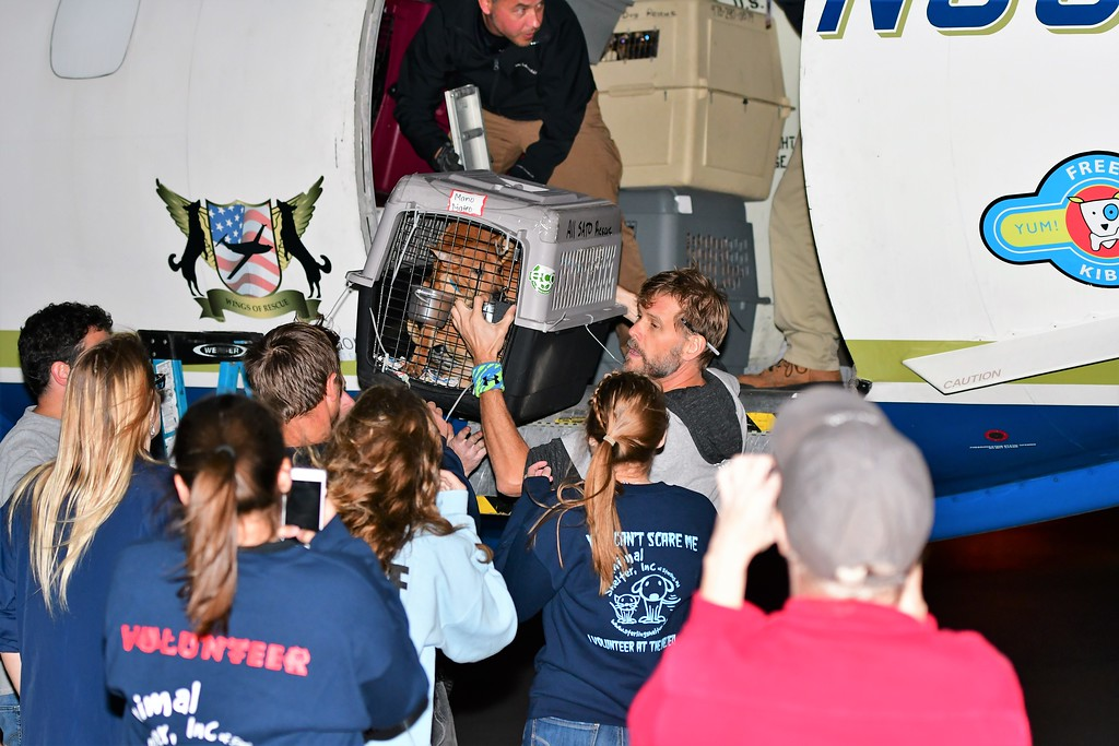 . Volunteers from Caribbean Connection Puppy Rescue in Marshfield and Buddy Dog Humane Society in Sudbury help offload displaced pets from Puerto Rico. Sentinel & Enterprise/Jim Fay