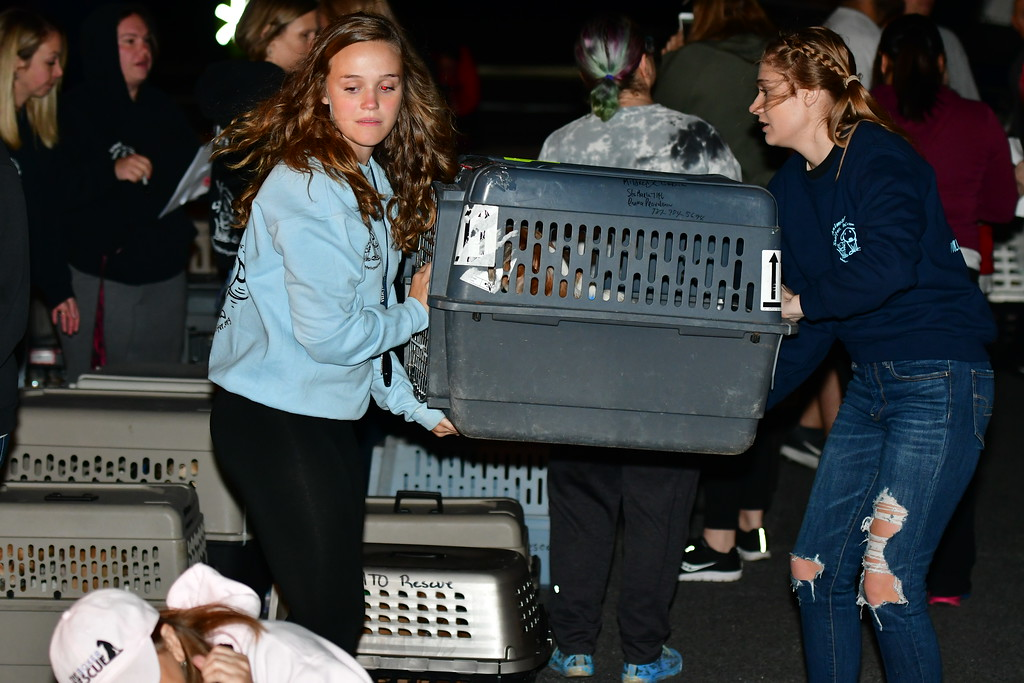 . Volunteers from Caribbean Connection Puppy Rescue in Marshfield and Buddy Dog Humane Society in Sudbury help offload displaced pets from Puerto Rico. Sentinel & Enterprise /. Jim Fay
