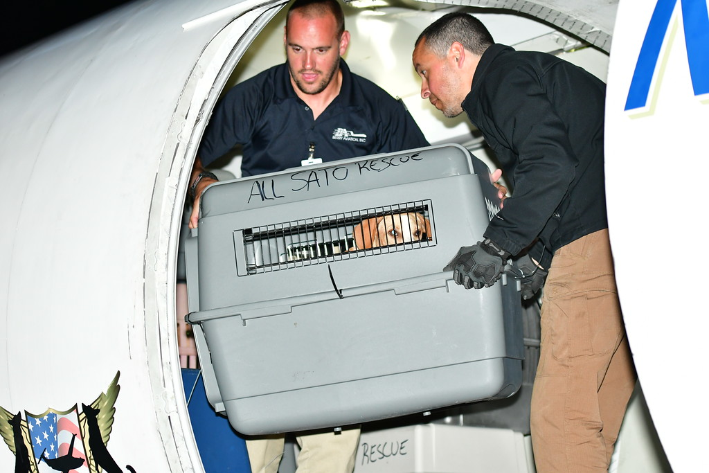 . Volunteers from Caribbean Connection Puppy Rescue in Marshfield and Buddy Dog Humane Society in Sudbury help offload displaced pets from Puerto Rico. Sentinel & Enterprise / Jim Fay