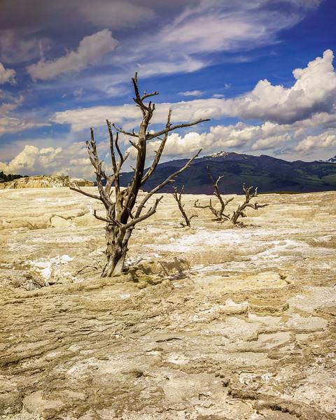 Dead trees of Angel Terrace