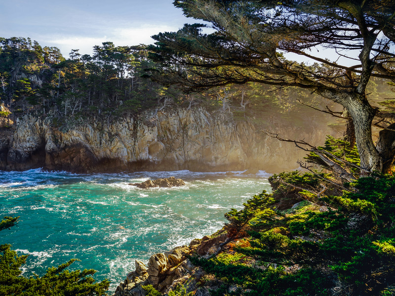 Point Lobos State Park-Morning Light and Mist