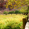 Orchard-Capital Reef National Park