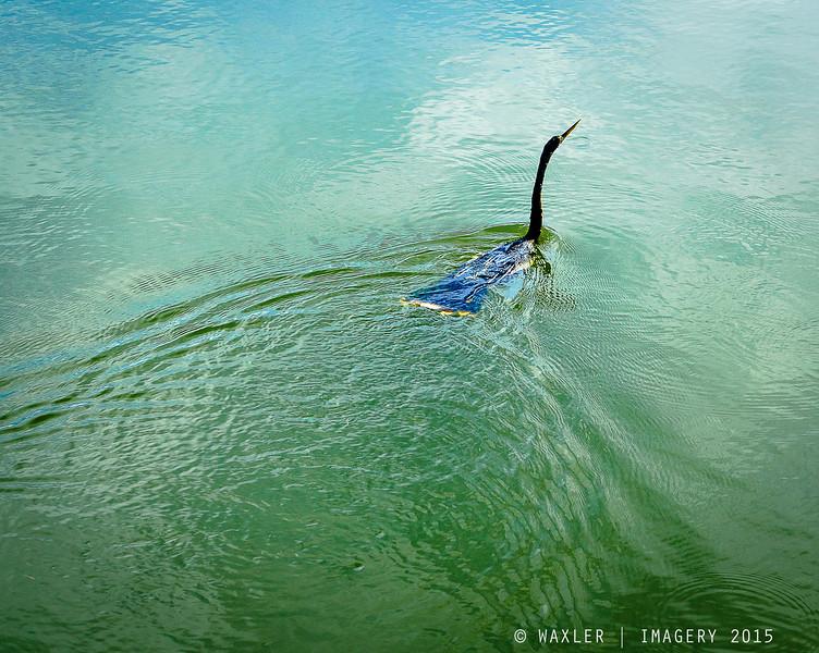 Green Cay Wetlands, Boynton Beach, FL