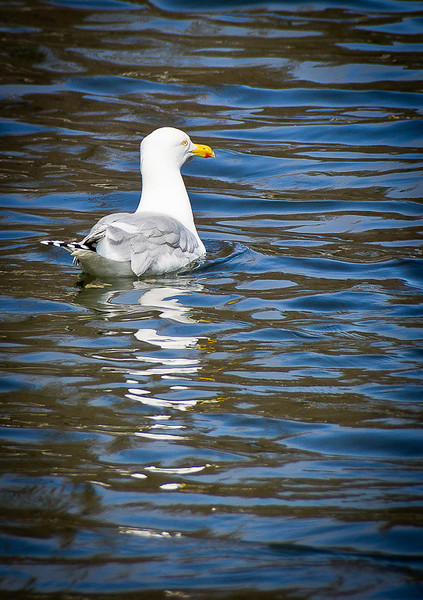 Seagull-Kittery Point, ME