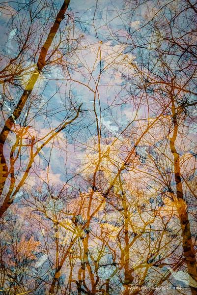 Rocky Pond Reflections 2