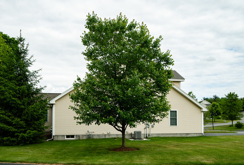 Mature trees add privacy