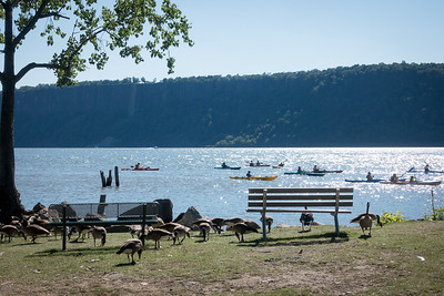 Geese, Kayaks and the Palisades