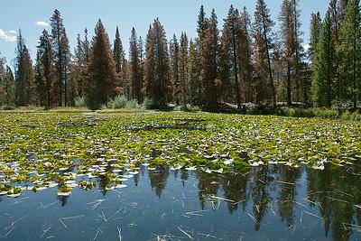 SDIM0595 - lily pond