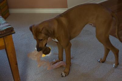 Jaxon opens his present