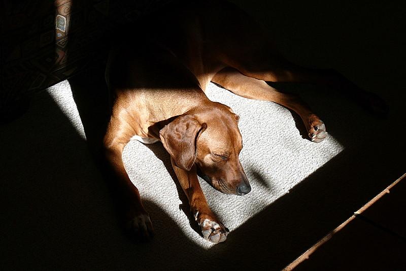 Piper found a sunny spot