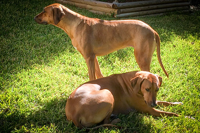 Reba (standing) and Jax