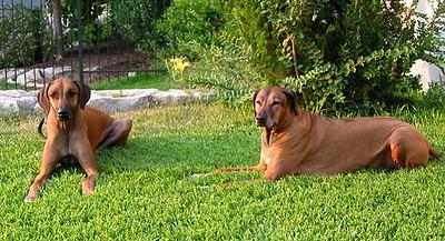 Roscoe  and Shona