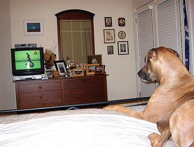 Roscoe watching TV