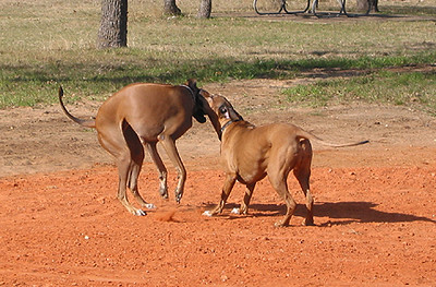 Shona and Roscoe Like to Wrastle