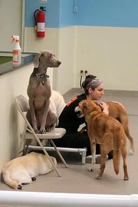 IMG_0185 - Doggy Daycare