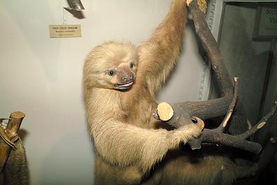 Animals in the Museum