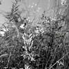 Flowers & Scenery 0203