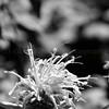 Flowers & Scenery 0222