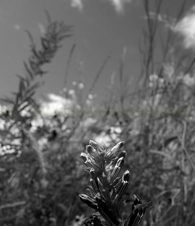 Black n White Flowers