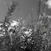 Flowers & Scenery 0210
