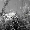 Flowers & Scenery 0206