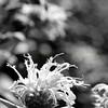 Flowers & Scenery 0224