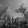 Flowers & Scenery 0234