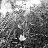 Flowers & Scenery 0204