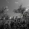 Flowers & Scenery 0231
