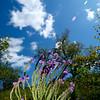 Flowers & Scenery 0246