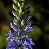 Flowers 1B291881 1