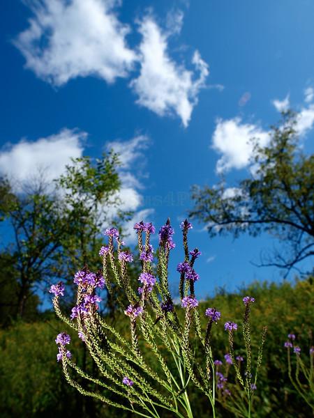 Flowers & Scenery 0242