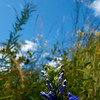 Flowers & Scenery 0209