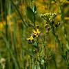 Flowers & Scenery 0154