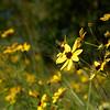 Flowers & Scenery 0165